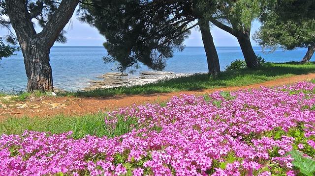 květiny na pobřeží