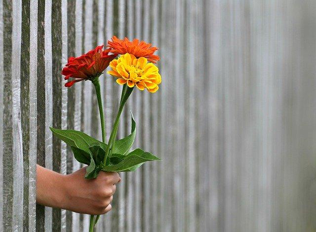 ruka podávající přes plot kytici
